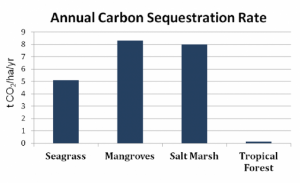 Seagrasses, Mangroves, and Salt Marshes store far more carbon than do tropical forests, and mangroves store the most of all. Source: The Climate Trust