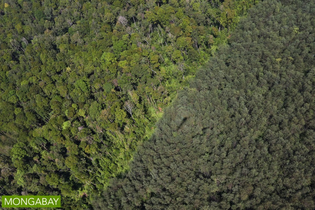 indonesiaForest