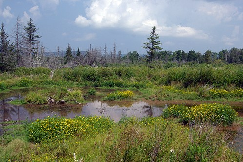 The Canaan Valley in West Virginia, now a prized national wildlife refuge, was once considered for development as a hydroelectric generating station.